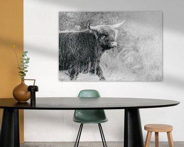Schotse hooglander stier van Melissa Peltenburg