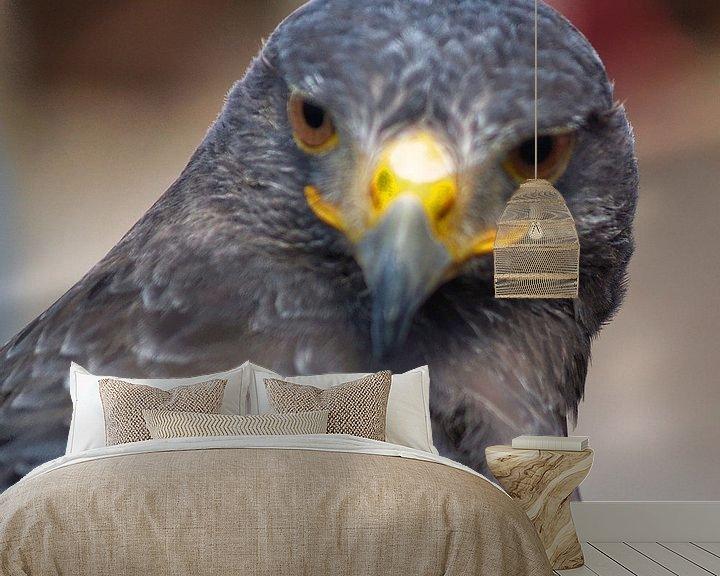 Beispiel fototapete: Raubvogel - 3 von Peter Morgenroth