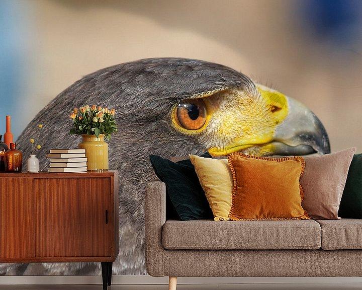 Beispiel fototapete: Raubvogel - 4 von Peter Morgenroth