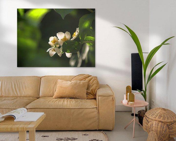 Beispiel: Blüten von Peter Morgenroth