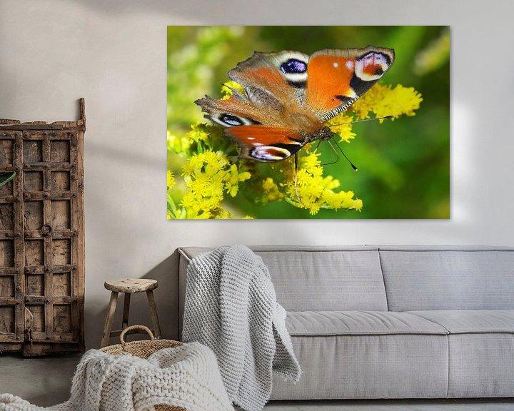 Impression: Papillon (Oeil de paon) sur Frank Herrmann