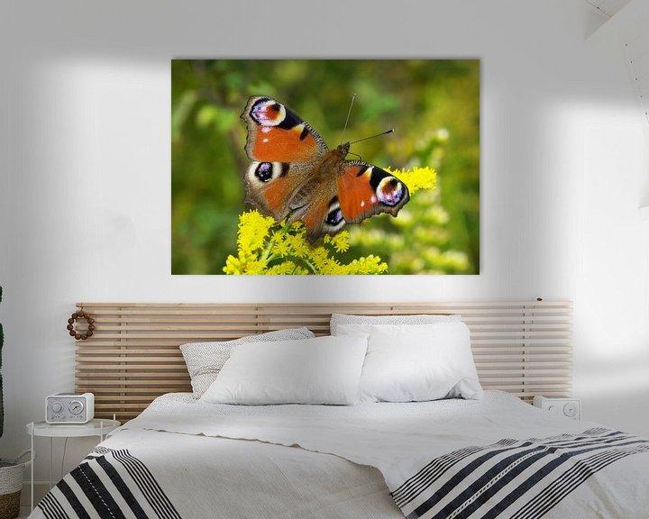 Sfeerimpressie: Vlinder (Pauwoog) van Frank Herrmann