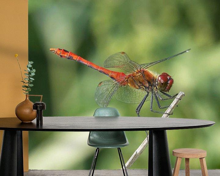 Sfeerimpressie behang: Libelle rustend op een tak van Frank Herrmann