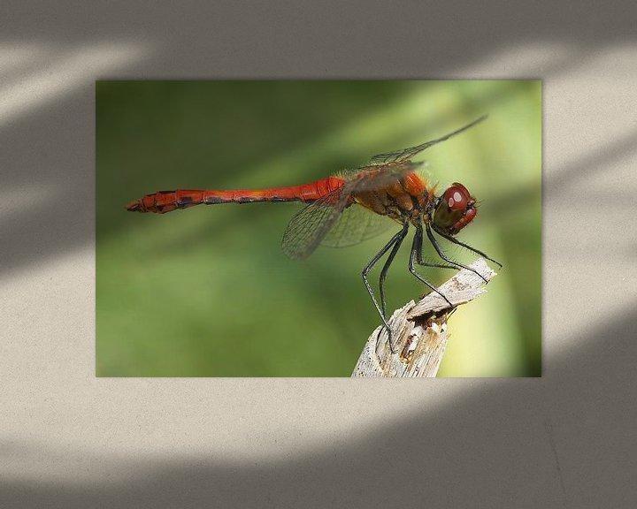 Sfeerimpressie: Libelle rustend op een tak van Frank Herrmann