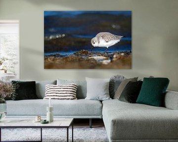 Strandloper voor een dreigende zee van Pieter Elshout