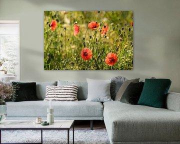 Mohnblumen in der Morgensonne von Margot van den Berg