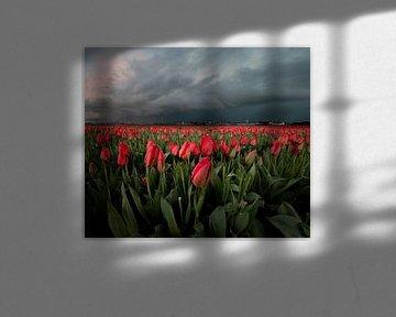 Tulpenfeld unter Wolke von Corné Ouwehand