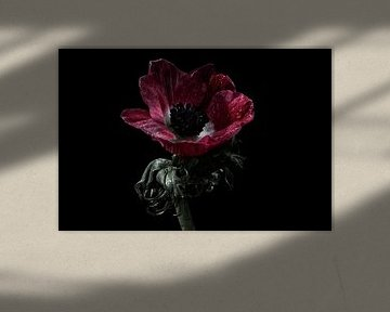 Schöne rote Blume als Stillleben