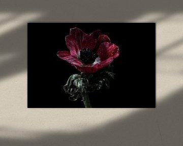 Mooie rode bloem als stilleven