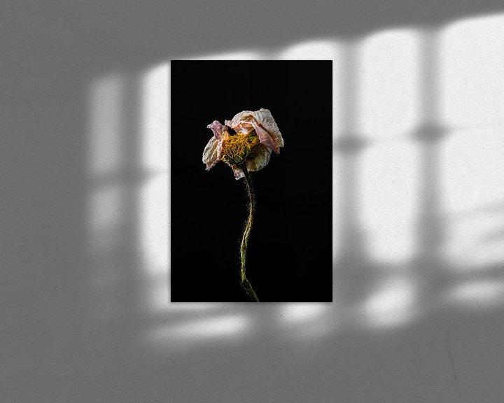 Beispiel: Schöne getrocknete Blume als Stillleben von Steven Dijkshoorn