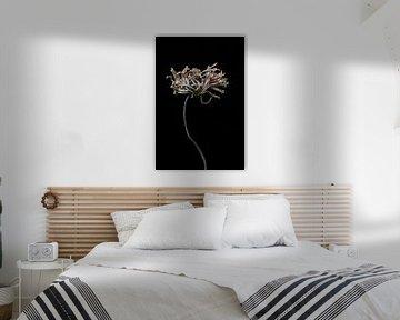 Weitgehend getrocknete Blume mit langem Stiel