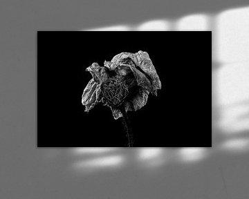 Stillleben getrocknete Blume in schwarz und weiß von Steven Dijkshoorn