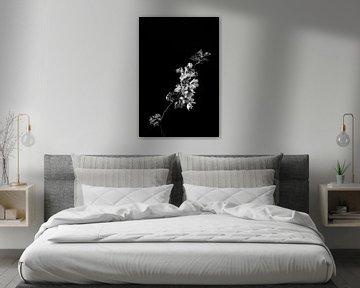 Blüte als Stillleben in Schwarz-Weiß von Steven Dijkshoorn