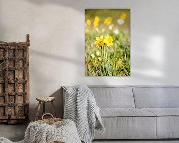 Ostern Blume von Mali Verhaegen