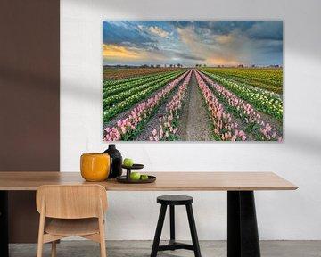 Tulpenveld in het Rijndistrict van Neuss van Michael Valjak