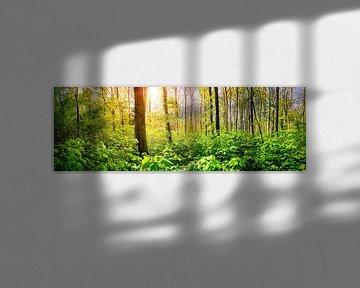 Groen bos in de lente met heldere zon op achtergrond