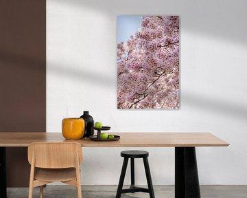 Japanische Kirschblüten (Sakura) von Bianca Kramer