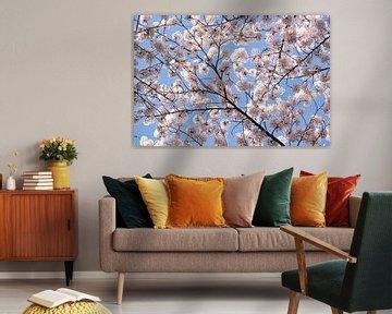 kersenbloesemtakken van Kim van Dam