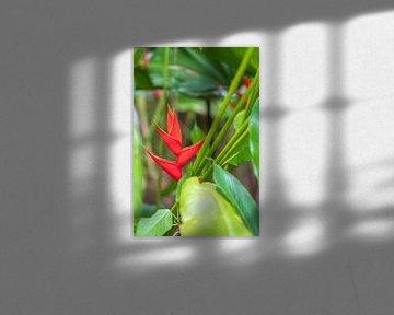 Rote Helikonie in Costa Rica von Diane Bonnes
