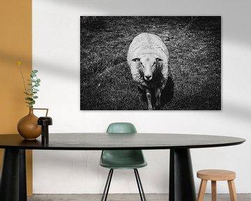 Das neugierige Schaf | Schwarz-Weiß-Foto von Diana van Neck Photography