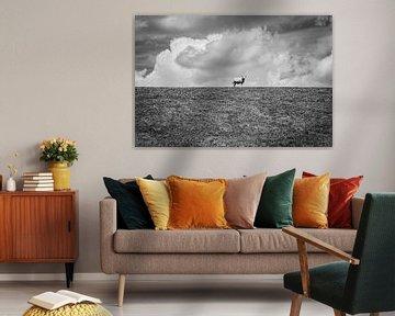 Schaf auf Ausschau | Schwarz-Weiß-Foto von Diana van Neck Photography