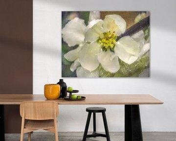 Weiße Quittenblüte von Christine Nöhmeier