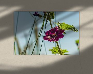 Schöne Blume von MyPics4u