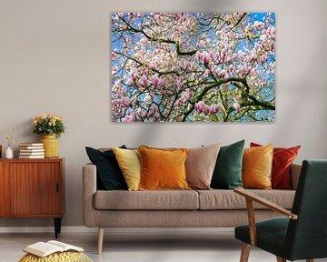 Magnolie in Blüte von Menno van der Haven