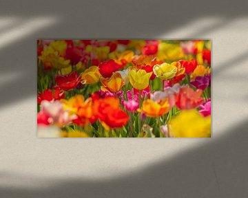 Tulpen II von Friedhelm Peters