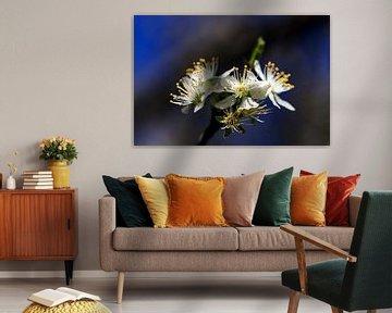 bloesem in de lente van Hans Vos Fotografie
