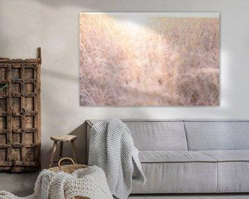 Zonsopkomst in het weiland   Zacht dromerig licht   Wazig en abstract van Wendy Boon