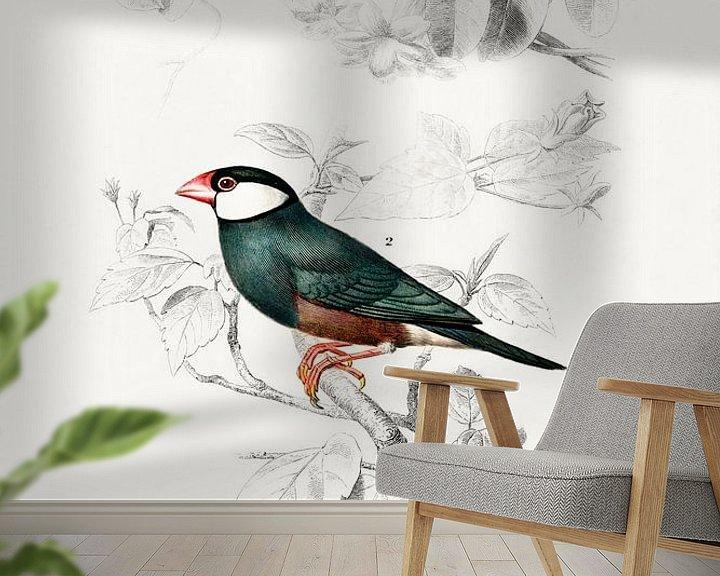 Beispiel fototapete: Red-cheeked Cordonbleu  and Java Sparrow von Heinz Bucher