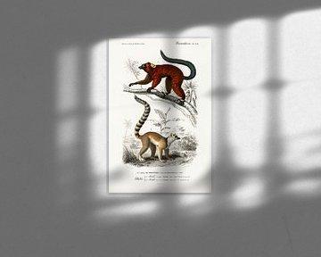 Lemur van Heinz Bucher