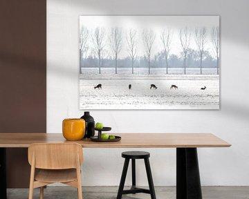 5 Hirsche in der niederländischen Winterlandschaft von Thomas Thiemann