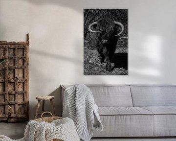 Schotse hooglander, zwart wit van Nynke Altenburg