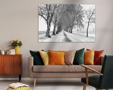 Allee mit Bäumen in Winterlandschaft von Beeldbank Alblasserwaard