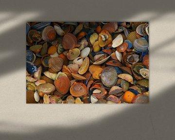 coquilles colorées sur Yvonne Blokland
