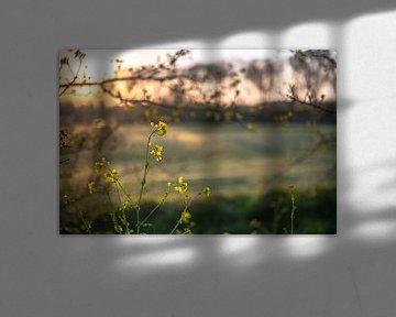 Blumen Teil 107 von Tania Perneel