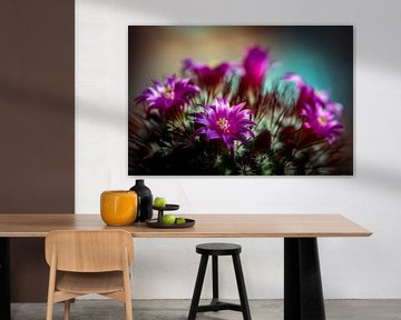 Macro cactus met paarse bloemen en stekels met bokeh details en close-up van Dieter Walther