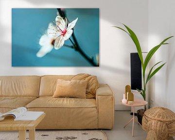 Blüte von Joey Van Hengel