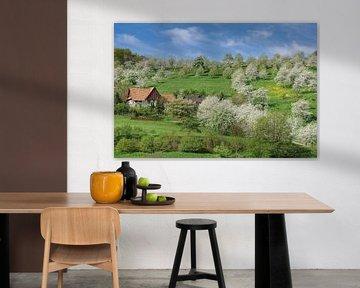 Obstblüte im Schwarzwald von Peter Eckert