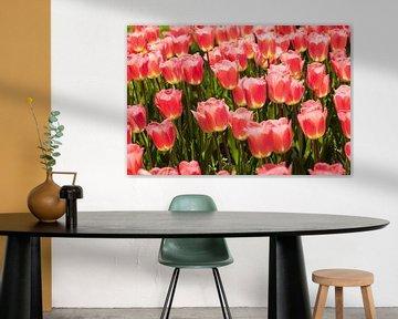 Tulpenmeer im Frühling von Martin Steiner