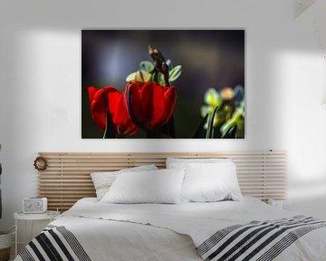Tulpenliebe von Michael Nägele