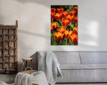 Orangene Tulpen Blumen von Martin Steiner