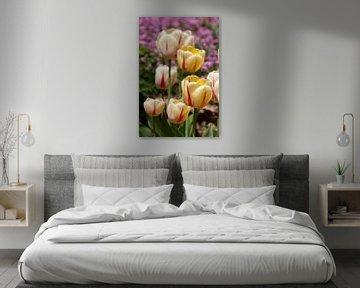 Tulpenmeer von Martin Steiner