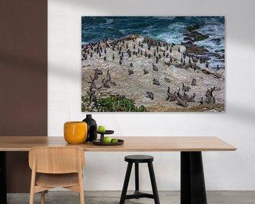 Pelikanen en zeeleeuwen op een rotsachtige kustlijn met de oceaan op de achtergrond van Mohamed Abdelrazek
