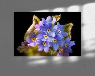 Vergeet-me-niet bloem van Hans-Jürgen Janda