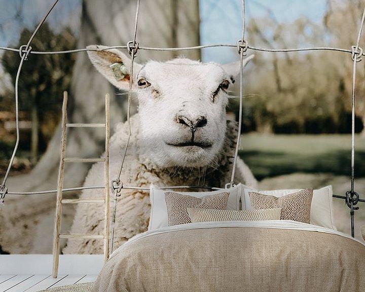 Beispiel fototapete: Schaf von Werner Lantinga