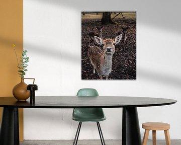 Portrait de cerf sur Werner Lantinga