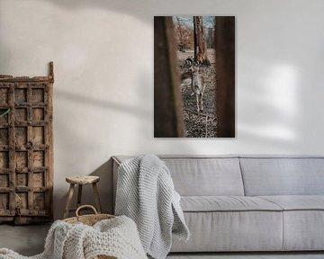 Hirsche im Wald von Werner Lantinga